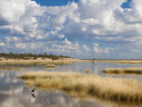 Etosha Pan after Rains, Etosha National Park, Namibia, Africa Photographic Print by Ann & Steve Toon