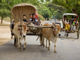 Myanmar, Burma, Bagan, an Ox-Drawn Farm Cart Passes a Horse-Drawn Buggy on Road to Nyaung U Market Photographic Print by Nigel Pavitt