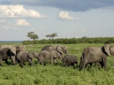 Group of Elephants after Mud Bath, Chobe National Park, Botswana, Africa Photographic Print by Peter Groenendijk