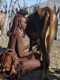 Himba Woman Milks a Cow in the Stock Enclosure Close to Her Home, Namibia Fotografie-Druck von Nigel Pavitt