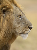 Lion, Masai Mara National Reserve, Kenya, East Africa, Africa Photographic Print by James Hager
