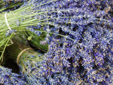 Lavender Bundles for Sale in Roussillon, Sault, Provence, France Photographic Print by Nadia Isakova