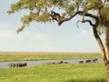 Elephants Bathing Late Evening, Chobe National Park, Botswana, Africa Photographic Print by Peter Groenendijk