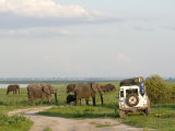 Group of Elephants and Landrover, Chobe National Park, Botswana, Africa Photographic Print by Peter Groenendijk