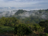 El Caney Plantation and View over Coffee Crops Towards the Andes Mountains, Near Manizales Reproduction photographique par Ethel Davies