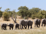 African Elephants, Etosha National Park, Namibia, Africa Photographic Print by Ann & Steve Toon