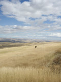 Farmland Off Highway 84, Near Pendleton, Oregon, United States of America, North America Photographic Print by Aaron McCoy