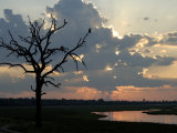 Tree with Fish Eagle at Sunset, Chobe National Park, Botswana, Africa Photographic Print by Peter Groenendijk