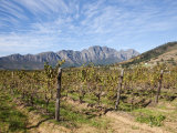 Franschoek, Cape Winelands, Western Cape, South Africa, Africa Photographic Print by Ann & Steve Toon