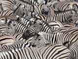 Plains Zebra, Crowd at Waterhole, Etosha National Park, Namibia, Africa Photographic Print by Ann & Steve Toon