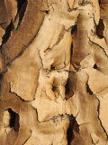 Quiver Tree Bark, Quiver Tree Forest, Keetmanshoop, Namibia, Africa Photographic Print by Ann &amp; Steve Toon