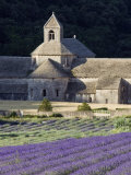 Abbey De Senanque and Lavender Fields, Near Gordes, Vaucluse, Provence, France, Europe Photographic Print by Guy Edwardes
