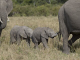 Two Young African Elephant, Masai Mara National Reserve Photographic Print by James Hager