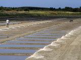 Collecting Salt in Salt Pans, Ars-En-Re, Ile De Re, Charente Maritime, France, Europe Photographic Print by Peter Richardson