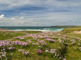 Wild Flowers and Coastline, Isle of Lewis, Outer Hebrides, Sotland, United Kingdom, Europe Fotografie-Druck von John Woodworth