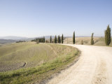 The Cypress Road Near Pienza, Val D'Orcia, Tuscany, Italy, Europe Photographic Print by Oliviero Olivieri
