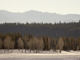 Stacked Forest Layers with Snow, Grand Teton National Park, Wyoming Photographic Print by James Hager