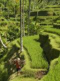Rice Terraces Near Tegallalang Village, Bali, Indonesia, Southeast Asia, Asia Impressão fotográfica por Richard Maschmeyer