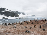 Cuverville Island, Antarctic Peninsula, Antarctica, Polar Regions Photographic Print by Robert Harding