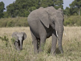 African Elephant Mother and Young, Masai Mara National Reserve Photographic Print by James Hager