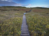 Autumn Flora of Birchwood and Mosses, and Wooden Path, Skaftafell National Park Photographic Print by Patrick Dieudonne