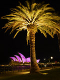 Festival of Light, Sydney Opera House and Palm Tree, Sydney, New South Wales, Australia, Pacific Photographic Print by Mark Mawson