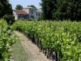 Vineyard in the Bordeaux Region, Gironde, Aquitaine, France Photographic Print by Peter Richardson