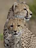 Cheetah Cub and Mother, Masai Mara National Reserve Photographic Print by James Hager