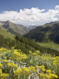 Wildflowers and Mountains Near Cinnamon Pass, Uncompahgre National Forest, Colorado Photographic Print by James Hager