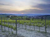 Vineyard at Sunset Above the Village of Torrenieri, Near San Quirico D'Orcia, Tuscany Photographic Print by Lee Frost