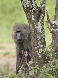 Olive Baboon Mother and Infant, Serengeti National Park, Tanzania Photographic Print by James Hager