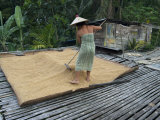 Iban Tribeswoman Raking Through Drying Rice Crop on Sacking Laid on Bamboo Longhouse Verandah Photographie par Annie Owen