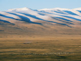 Sheep Grazing on the Plains in Bayanbulak, Xinjiang Province, China, Asia Photographic Print by Christian Kober