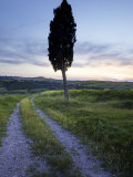 Lone Cypress Tree at Sunset, Near Pienza, Tuscany, Italy, Europe Photographic Print by Lee Frost
