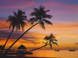 Palm Trees and Ocean at Sunset, Maldives, Indian Ocean, Asia Photographic Print by Sakis Papadopoulos