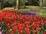 Flowers at Keukenhof Gardens, Near Leiden, Netherlands, Europe Photographic Print by Ethel Davies