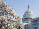 Spring Cherry Blossom, the Capitol Building, Capitol Hill, Washington D.C. Photographic Print by Christian Kober