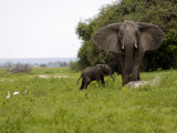 Elephant and Newly Born Calf, Chobe National Park, Botswana, Africa Photographic Print by Peter Groenendijk
