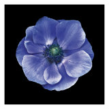 Anemone Giclee Print by JoSon 