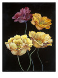 Midnight Bloom I Reproduction procédé giclée par Susan Jeschke
