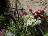 Bicycle Decorated with Flowers, Brantome, Dordogne, France, Europe Photographic Print by Peter Richardson