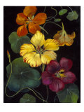 Midnight Bloom IV Reproduction procédé giclée par Susan Jeschke