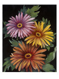Midnight Bloom III Reproduction procédé giclée par Susan Jeschke