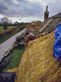 Thatching a Cottage at Stoke St. Gregory, Somerset, England, United Kingdom, Europe Photographic Print by Nigel Blythe