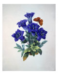 Gentiana Acaulis or Stemless Blue Gentian, from Choix des plus belles fleurs, 1827-33 Giclee Print by Pierre-Joseph Redouté