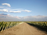 Vineyards and the Andes Mountains in Lujan De Cuyo, Mendoza, Argentina, South America Photographic Print by Yadid Levy
