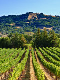 Grape Vines in Northern California Near Mendocino Reproduction photographique par Michael DeFreitas