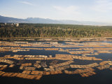 Aerial View of Cut Logs in the Sea Waiting to Be Transported, Vancouver, British Columbia, Canada Photographic Print by Christian Kober