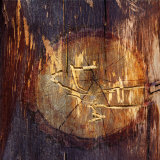 Woodworm Hieroglyphics Photographic Print by Diane Miller