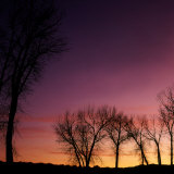 Sunset over Grove of Trees Photographic Print by Deon Reynolds